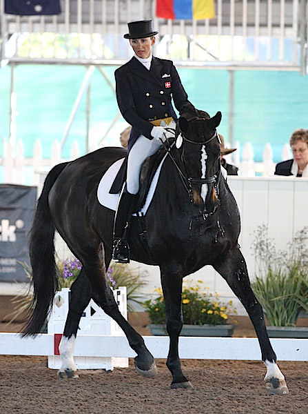 My Lady in her USA debut ridden by Mikala Gundersen. © 2012 Ken Braddick/dressage-news.com