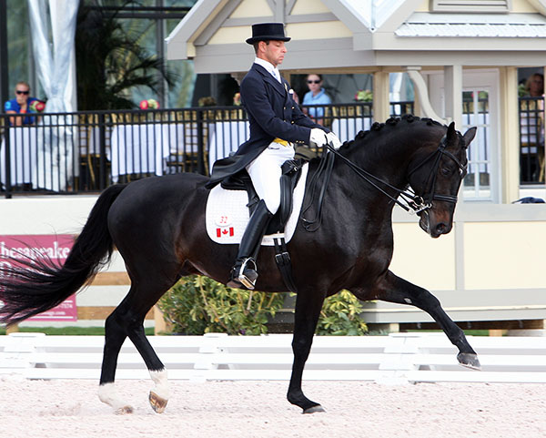 David Marcus and Chrevi's Capital. © 2012 Ken Braddick/dressage-news.com