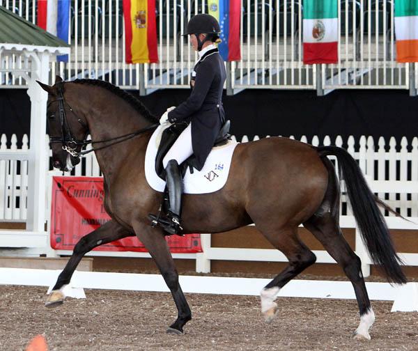 Alcazar being ridden by Katherine Bateson-Chandler in 2013. © Ken Braddick/dressage-news.com