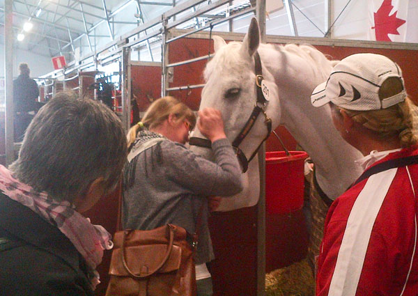 Christina Almström with D Niro, the Swedish Warmblood horse she bred and lost track of until Jacqueline Brooks brought the string gray to Gothenburg, 60 miles (100km) from hs birthplace and a remarkable reunion. Jacqueline and her mother, Mary, look on Christina caresses D Niro, weeping with joy.