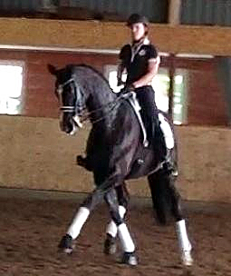 Apassionata being worked by Brandi Roenick who will compete the seven-year-old mare successfully shown in German young horse events.
