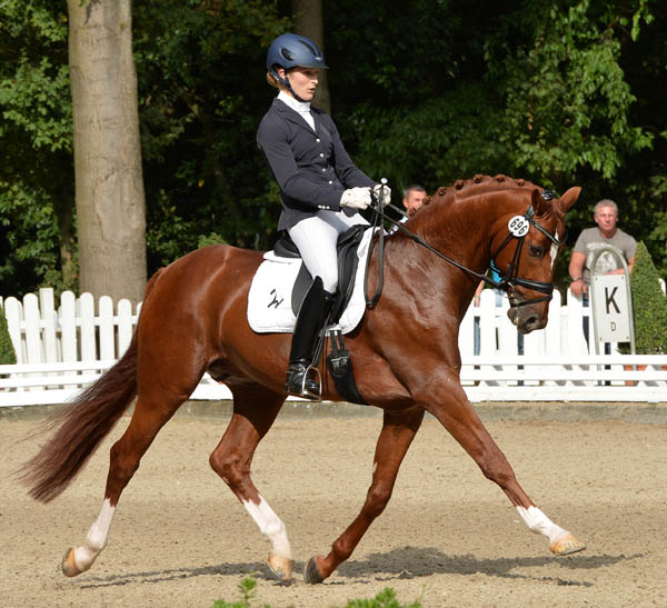 Lord Carnaby ridden by Beatrice Buchwald to 6-year-old Bundeschampionate title. ©2013 Roz Neave/The Horse Magazine.