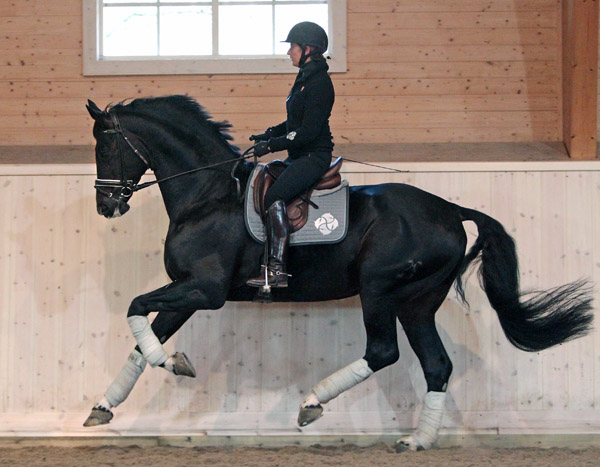 Stallion Benetton Dream Bought by Lövsta Stud, Tinne Vilhelmson Silfvén to Train & Compete