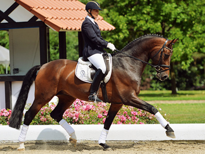 psi_newsletter_2013_auktion_dressage_01