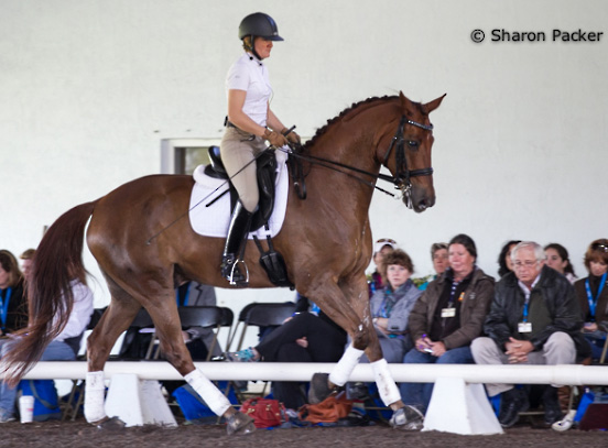 Don Joseph ridden by Ilse Schwarz at the USDF trainers' conference in Florida. © 2014 Sharon Packer