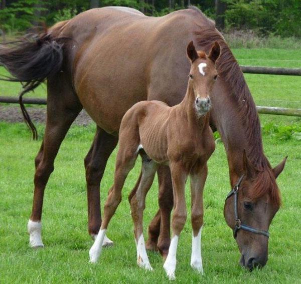 Tantoni Fabio with mother, Rien Ne Va Plus, as a yearling.