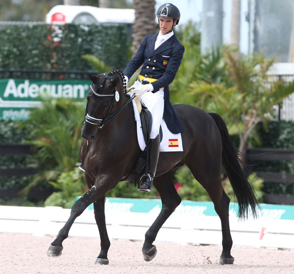Spain's Juan Matute, Jr. on Don Diego Ymas was the top scoring Prix St. Georges combinations in the Wellington Nations Cup of two phases over two days. © 2013 Ken Braddick/dressage-news.com