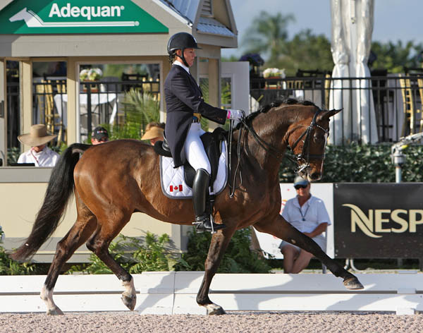 Karen Pavicic and Don Daiquiri in the Adequan Global Dressage Festival CDI3* Grand Prix Special. © 2014 Ken Braddick/dressage-news.com