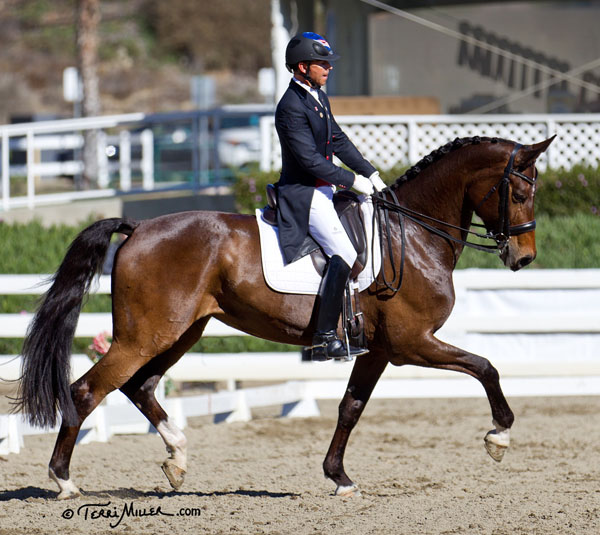 Rosamunde in her debut competition with Steffen Peters at the California Dressage Sociiety San Diego Mid-Winter show. © 2014 Terri Miller