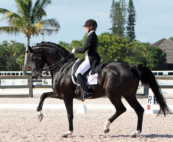 Ashley Holzer riding Dressed in Black in the stallion's first Grand Prix, a national competition at the Adequan Global Dressage Festival. © 2014 Ken Braddick/dressage-news.com