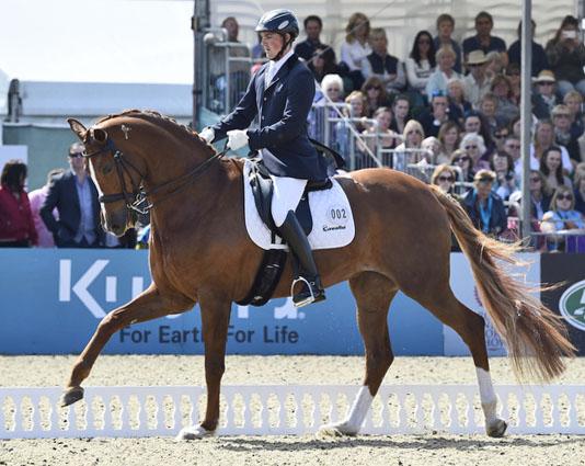 Woodlander Farouche ridden by Michal Eilberg at Royal Windsor Horse Show.