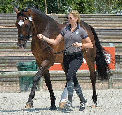 Briana Burgess, the new young gun of Australian dressage, with La Scala at the Deauville veterinary check. © 2014 The Horse Magazine