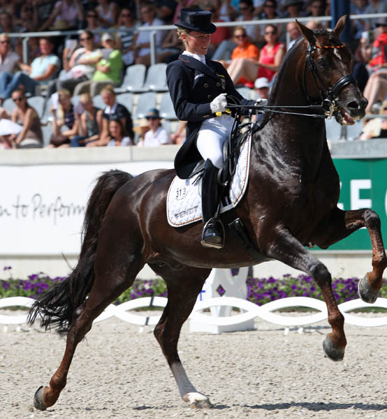 Damon Hill leaping in the final centerline passage after Helen Langehanenberg said she reacted too strongly when the horse decided to stop early. © 2014 Ken Braddick/dressage-news.com