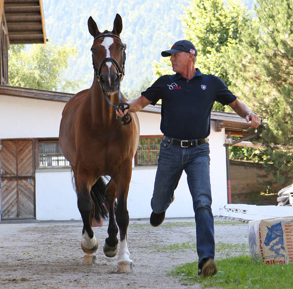 Rafalca being trotted by Jan Ebeling at the Schindlhof XDU4* veterinary check. © 2014 Ken Braddick/dressage-news.com