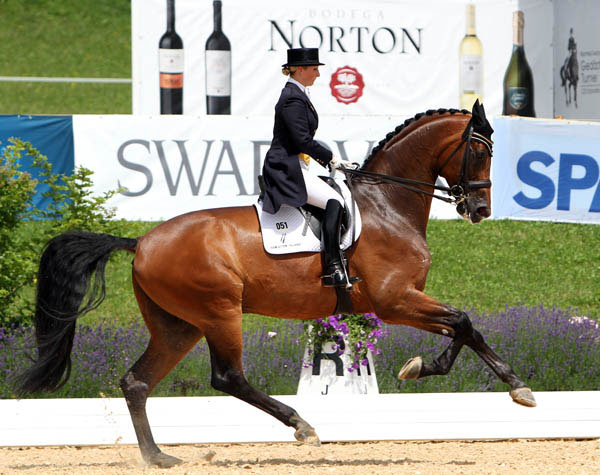 Ronan displaying huge and expressive gaits with Kristy Oatley aboard. © 2014 Ken Braddick/dressage-news.com
