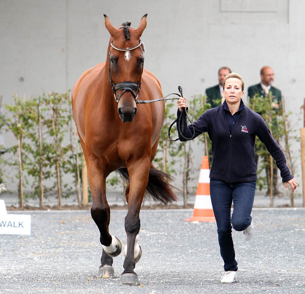 Lisa Wilcox of the United Sates with Denzello at the veterinary check for the CDI4*. © 2014 Ken Braddick/dressage-news.com