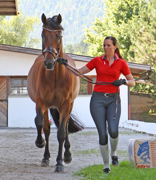 Lyndal Oatley who rides Sandro Boy into the Australian World Equestrian Games selection trials as the only combination with an average of 2014 Grand Prix scores of a least 70, shown here at the veterinary check at-Schindlhof  CDI4* in Austria. © 2014 Ken Braddick/dressage-news.com