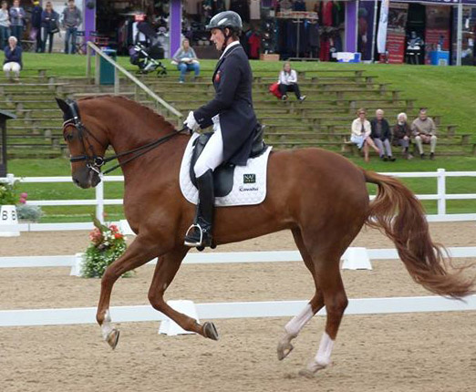 Michael Eilberg riding Woodlander Farouche at Hartpury.
