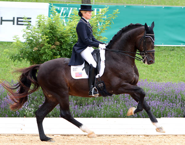 Calecto V, ridden by Tina Konyot, back in good health after a lung infection. © 2014 Ken Braddick/dressage-news,com