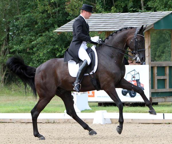 Big moving Selten HW being ridden by Anders Dahl at Hickstead, England. © 2014 Ken Braddick/dressage-news.com