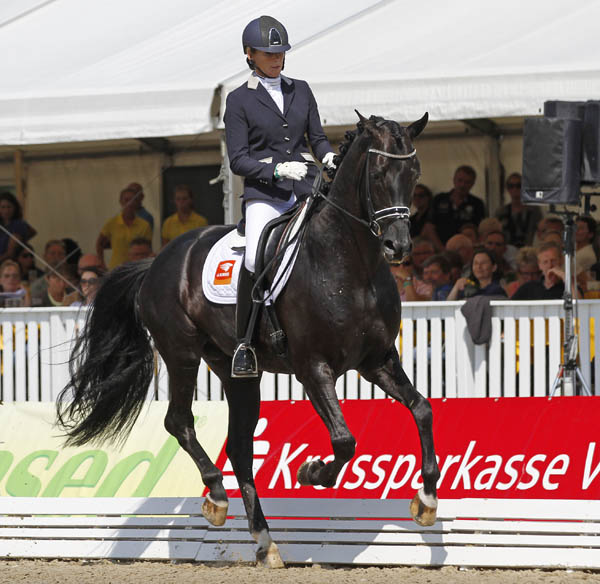 Dream Boy 90, a black KWPN stallion ridden by Gerdine Maree, to win the qualifier for six year olds at the World Young Horse Championships. © 2014 Ken Braddick/dressage-news.com