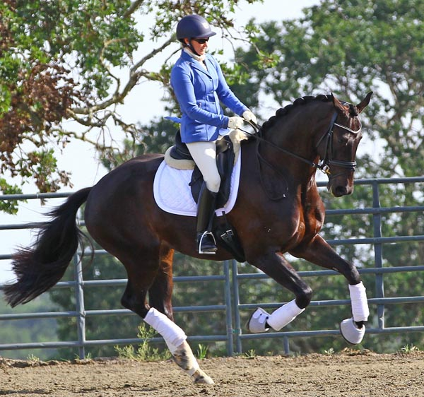 Emilion being ridden by Kelly Casey. © 2014 Lori Rocereto