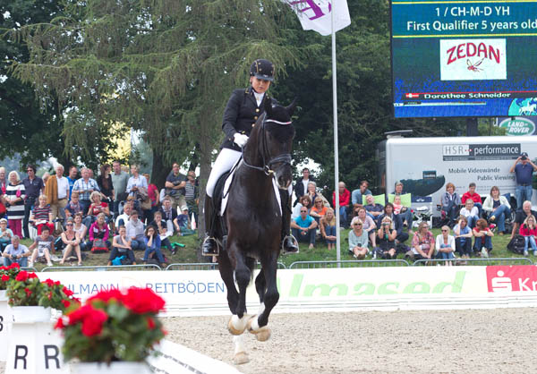Sezuan 2, Danish Warmblood stallion, ridden by Dorothee Schneider in canter which received a mark of 10 at the World Young Horse Championships. © 2014 Ken Braddick/dressage-news.com