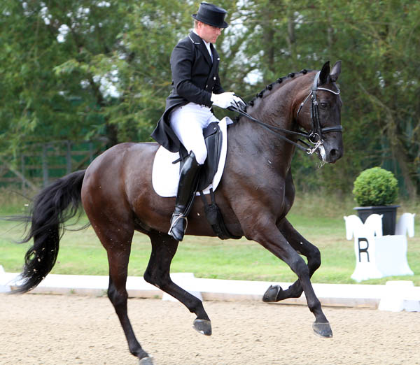 Selten HW Being ridden by Anders Dahl at Hickstead, England CDI that was the champion young horse's last small tour event. ©2014 Ken Braddick/dressage-news.com