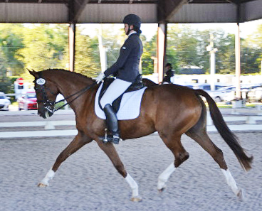 Anna Marek and Cinderella competing in Wellington.
