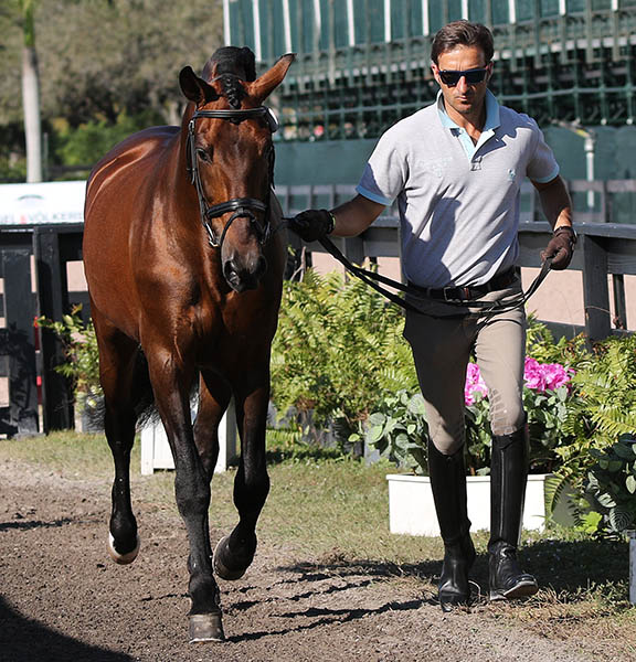 José Daniel Martín Dockx leading Grandioso in the veterinary check. © 2015 Ken Braddick/dressage-news.com