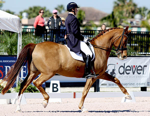 Robert Dover riding Talent at Grand Prix at the Adequan Global Dressage Festival. © 2015 Ken Braddick/dressage-news.com