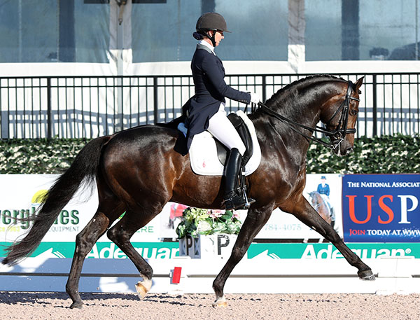 Sabine Schut-Kery competing Sanceo for victory with a score of 74.471 per cent in the CDI1* in Wellington. © 2015 Ken Braddick/dressage-news.com