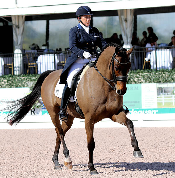 Shelly Francis on Doktor competing for the first time since the World Equestrian Fesatival in Aachen, Germany last July. © 2015 Ken Braddick/dressage-news.com