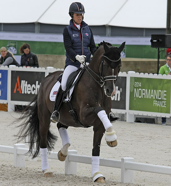 Valegro being warmed up by Charlotte Dujardin before a championship ride. © Ilse Schwarz/dressage-news.com