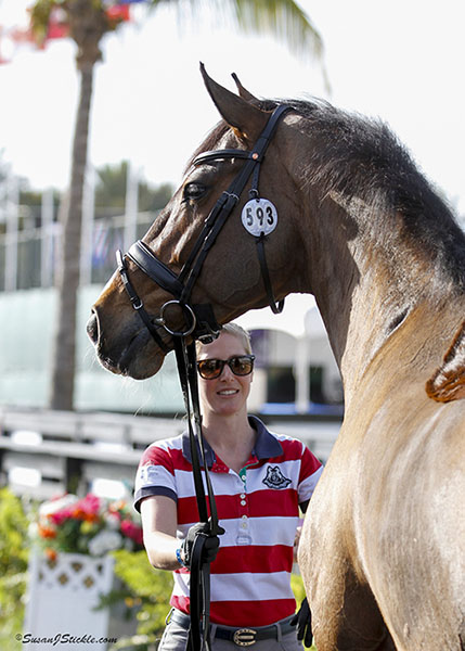 Laura Tomlinson, Olympic team gold and individual bronze medal rider for Great Britain, with Unique at the Global Dressage Festival veterinary inspection for the Prix St. Georges. © 2015 SusanJStickle.com