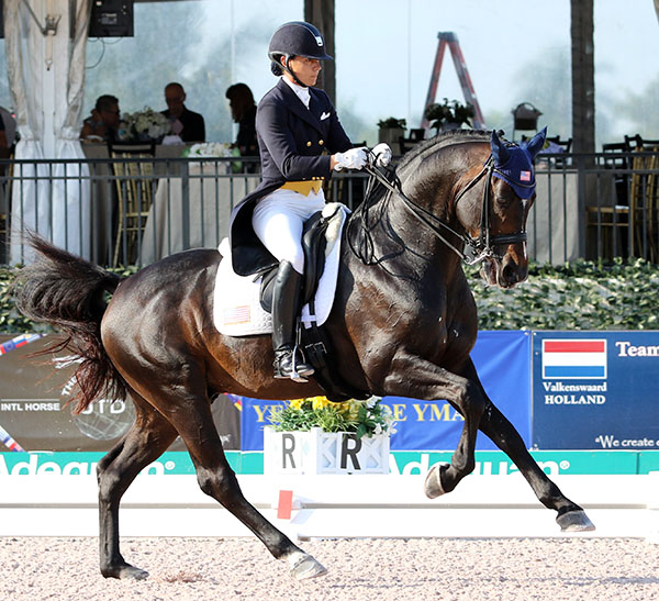 Allison Brock on Claudine and Fritz Kundrun's Rosevelt competing at the on their way to posting a personal best score on a day that owners Claudine and Fritz Kundrun at the Global Dressage Festival in Wellington. ©  2015 Ken Braddick/dressage-news.com