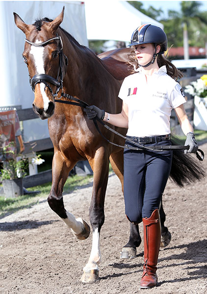 Antonio Arl trotting Equestricons Ziggy at the veterinary inspection at the Adequan Global Dressage Festival in Florida. © 2015 Ken Braddick/dressage-news.com