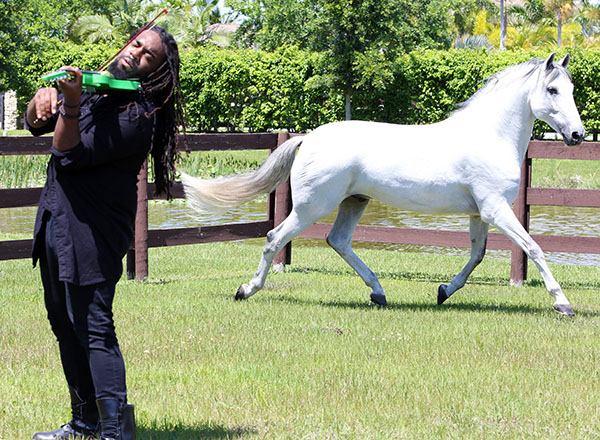 Then playing for the horse to give a solo freestyle performance. © 2015 Ken Braddick/dressage-news.com