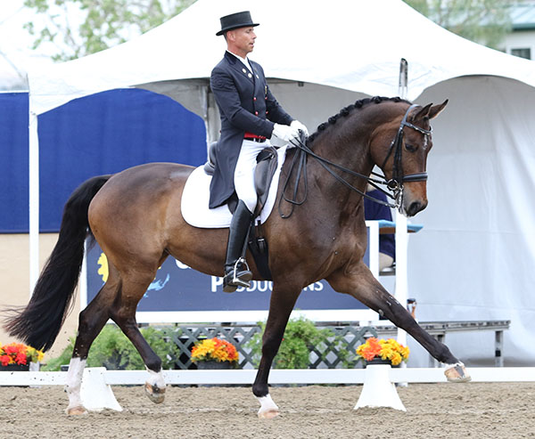 Rosamunde being ridden by Steffen Peters to victory at the California Dreaming World Cup Grand Prix Special. © 2015 Ken Braddick/dressage-news.com