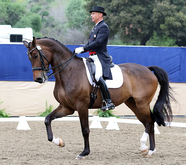 Steffen Peters riding Rosamunde in California. © 2015 Ken Braddick/dressage-news.com