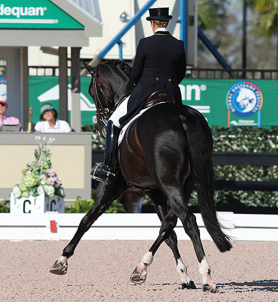 Benetton Dream ridden by Tinne Vilhelmson Silfven showing off the stallion's gaitys. © 2015 Ken Braddick/dressage-news.com