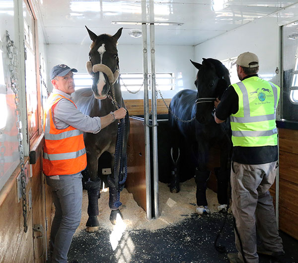 Valegro held by Alan Davies being watched carefully by Painted Black who was his travelmate across the Atlantic. © 2015 Ken Braddick/dressage-news.com