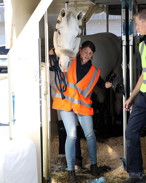 Cornet D'Amour to be ridden by Germany's Daniel Deusser leaving the container he traveled in from Europe for the World Cup Final in Las Vegas. © 2015 Ken Braddick/dressage-news.com