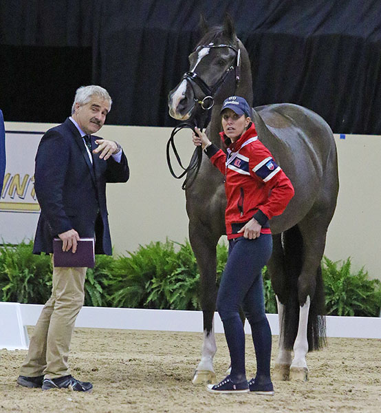 "Dr. Mike Tomlinson, the FDEI vet, pointing out the walk-trot ""course"" to Charlotte Dujardin with Valegro. © 2015 Ken Braddick/dressage-news.com"