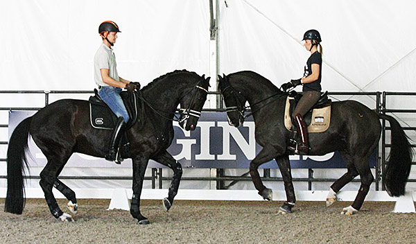 Going head to head are Edward Gal on Glock's Undercover and Carlotte Dujardin on Valegro in warmup session Wednesday, the day before the start of the World Cup Final with the Grand Prix. © 2015 Ilse Schwarz/dressage-news.com