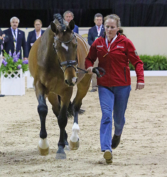 El Santo NRW is the latest mount for Germany's superstar Isabell Werth to compete in a World Cup Final. Isabell claimed the title at this venue in 2007 on Warum Nicht and on Fabienne in 1992. © 2015 Ken Braddick/dressage-news.com