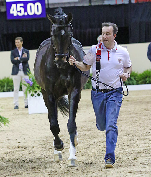 Russia's Elena Sidneva has ridden Romeo Star in the European Championships in 2013 and in their second straight World Cup Final.. © 2015 Ken Braddick/dressage-news.com