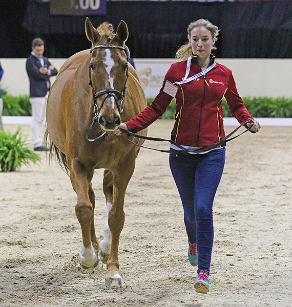 Fabienne Lutkemeier with Qui Vinci Dynamis at the World Cup Final vet check. © 2015 Ken Braddick/dressage-news.com