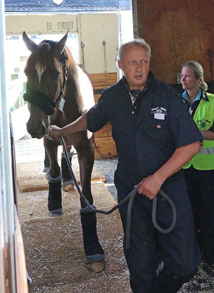 Glock's Flirt to be ridden by Hans Peter Minderhoud being escorted out of the air container to go to the Thomas & Mack Center for the World Cup Final. © 2015 Ken Braddick/dressage-news.com
