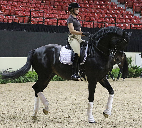 Germany's Jessica von Bredow Werndl on Unee BB getting ready for the duo's second World Cup Final. © 2015 Ken Braddick/dressage-news.com